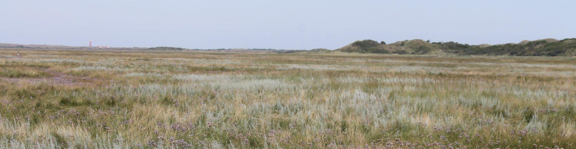 Wijds uitzicht in de Slufter op Texel